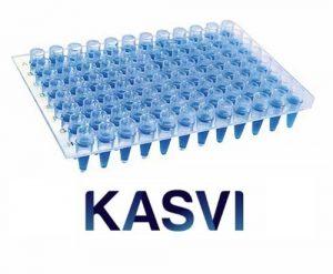 Microplaca De Pcr Sem Borda Com Poços Elevados Kasvi
