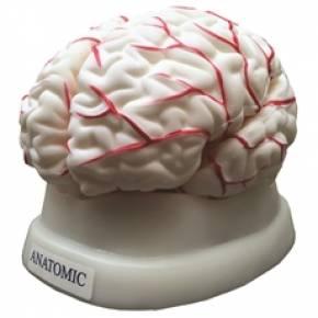 Cérebro Com 8 Partes