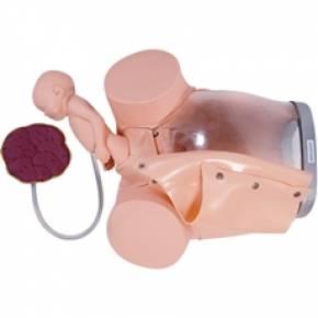 Simulador de Parto Com Cervix Episiotomia e Feto Com Placenta