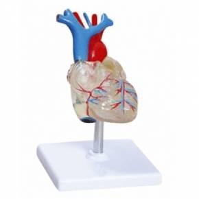 Coração Transparente Com 2 Partes