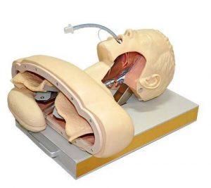 Modelo de Intubação Adulto Luxo