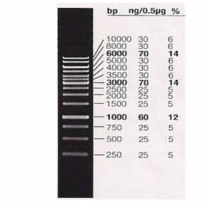 Marcador de Peso Molecular 1kb