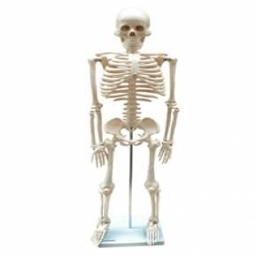Esqueleto de 85 cm