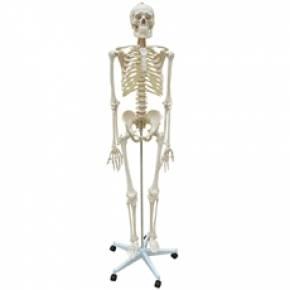 Esqueleto Padrão Aprox. 170 cm Com Rodas