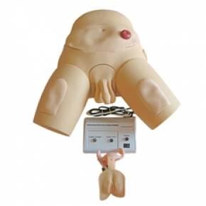 Simulador Para Cateterização Bissexual Com Dispositivo de Controle