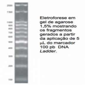 Marcador de Peso Molecular 100bp