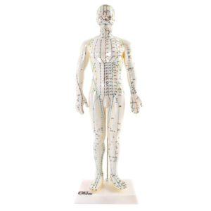 Modelo Anatômico de Acupuntura Masculino