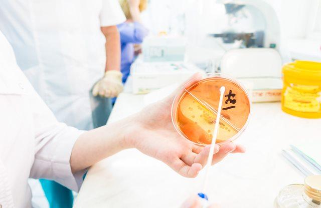 semeadura de microbiologia